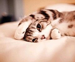 看我睡姿都这么可爱吧!谁能有我*^o^*嘿嘿!(>﹏<)