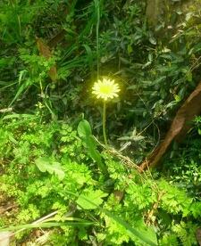 哇塞,黄灿灿的小野菊。