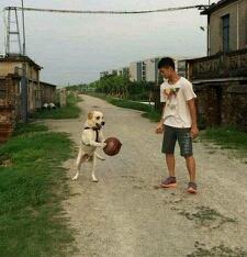 我家的狗说要学打球。(右边是我家狗。)