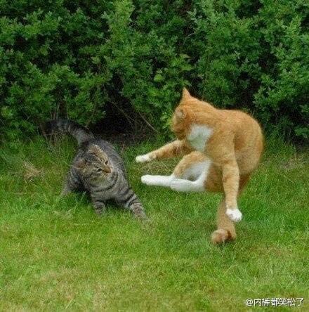 我妈去了趟河南,从嵩山底下买回来两只猫。。。。尼玛。。。