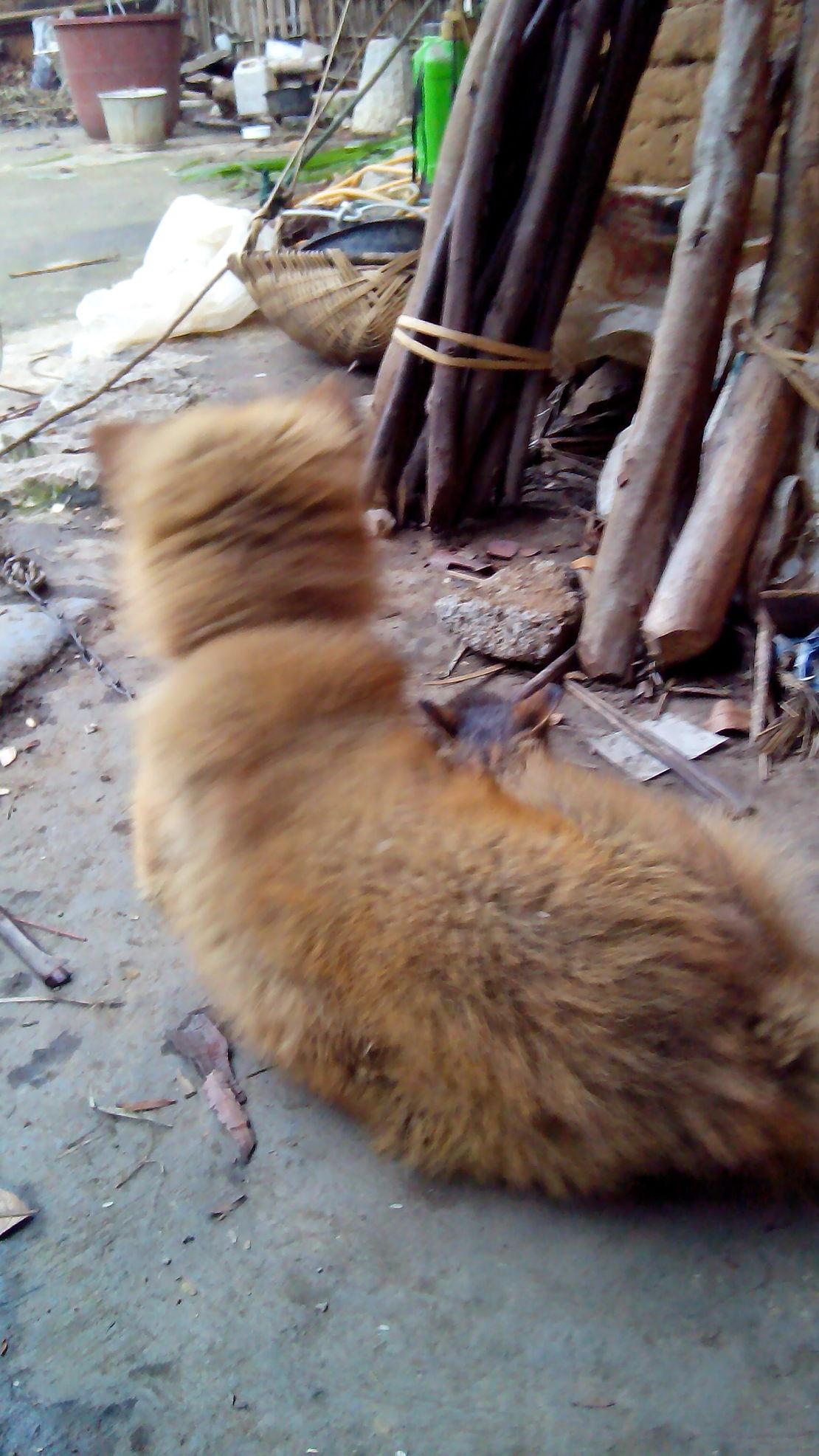 我的狗是金毛狗你信吗?
