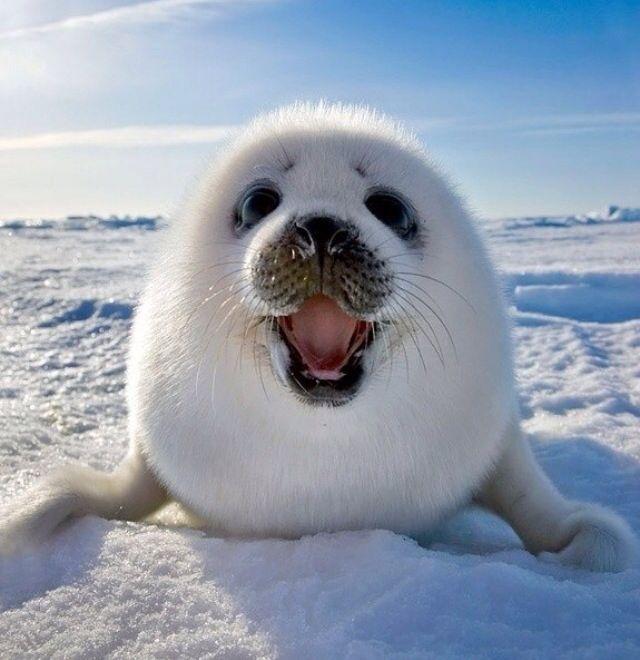今天是世界微笑日。爱笑的人运气不会太差。