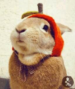 在这里给各位兔友道个歉,之前发布的七步诗好多错字  第一次手打的我,请大家原谅 以后我会努力为大家送上冷笑话的 嘿嘿