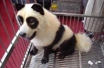 托朋友买的熊猫,感觉不太对劲,我是不是被骗了?