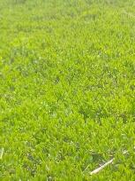 没有花香没有树高我是一棵无人知道的小草,你看我像吗?谁说我小,可是,我感觉我不小。