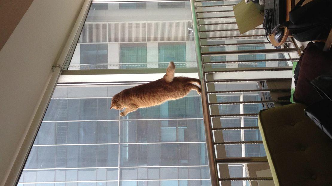 有谁知道猫有时候对着窗外看一直看是在想啥么