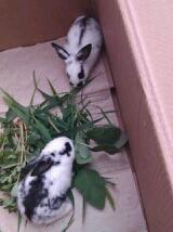 看见这两只兔子,有什么想法嘛?