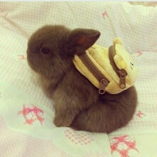 小兔子背上书包,好萌!有木有?