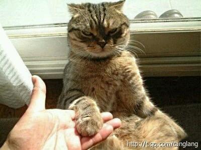 """喵:""""对狗而言,这叫""""握手"""",但对我而言,这叫""""扶着朕""""!"""""""