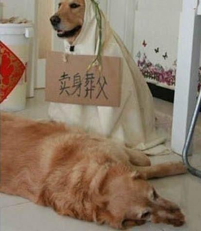 我去,狗都这么孝顺