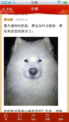 大冷的天,你冻成了狗,狗冻成了刨冰