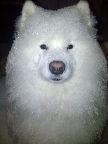 雪天遛狗的后果:牵出去时还是狗,牵回来就变成刨冰了。