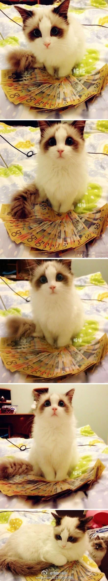 这货居然是 招 财 猫!!