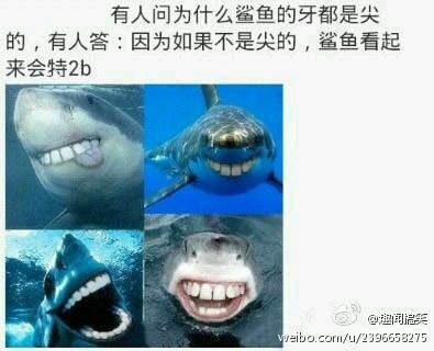 鲨鱼的牙为什么是尖的