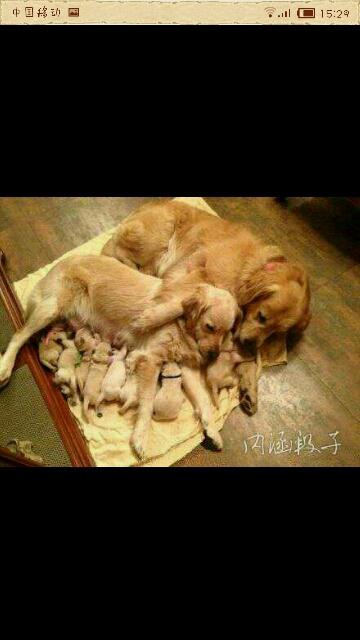 幸福的一家子。。。。