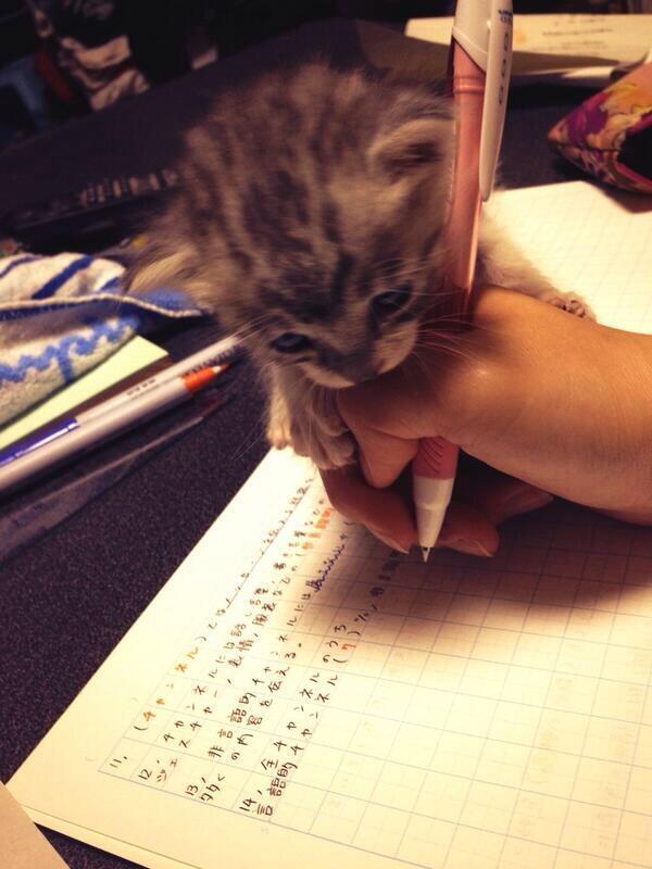 主人,我来帮你写吧~