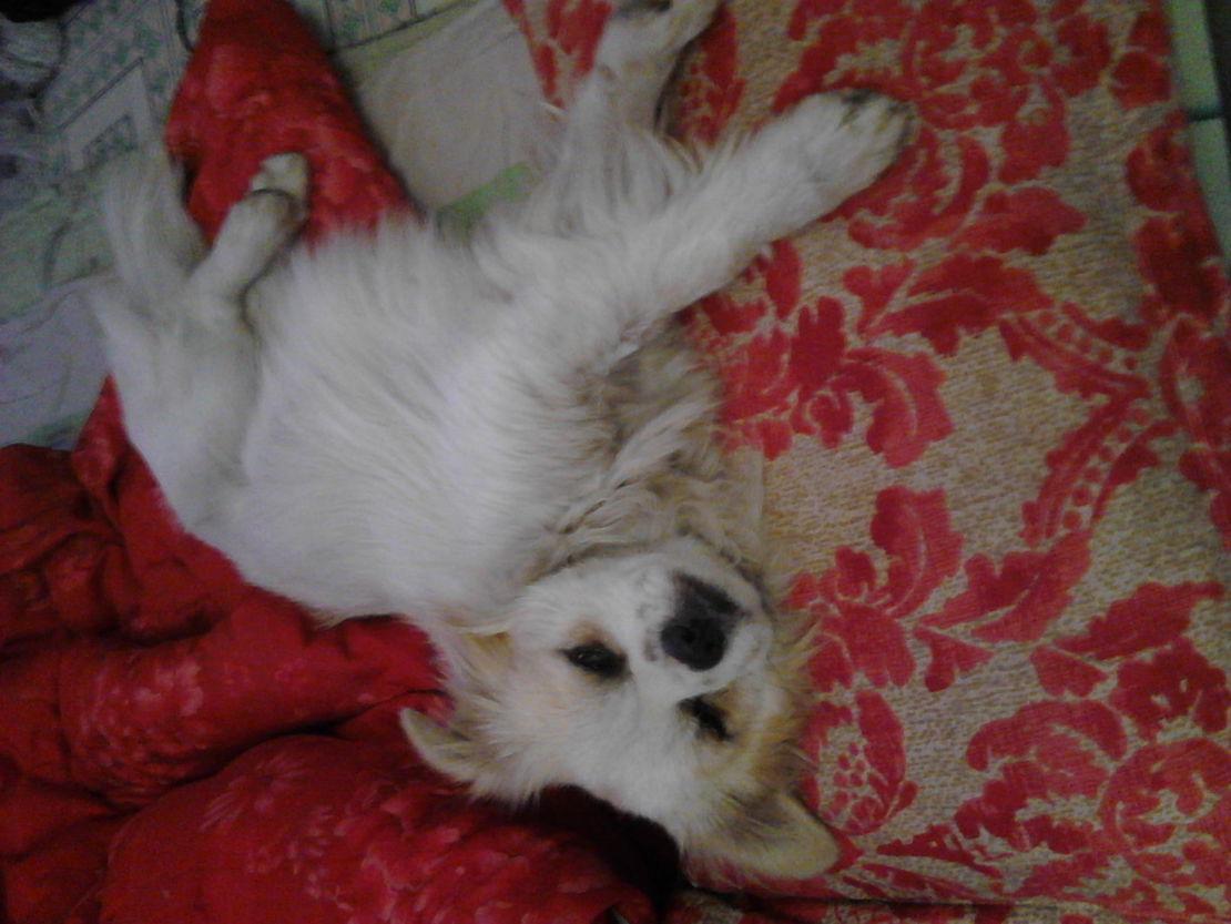 卧槽你这样叫老子怎么睡?那枕头是老子的。。。。。