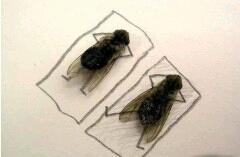 """【两只苍蝇打羽毛球】有两只苍蝇在打羽毛球,正打着一苍蝇突然倒地了,另一只苍蝇就上前问:""""咋地了,哥们?""""这只苍蝇答道:""""拿错拍子了,拿成电蝇拍了。"""""""