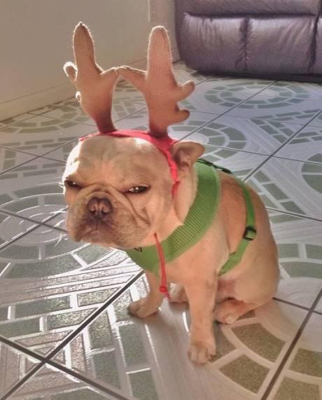 过你妹的圣诞节啊!二逼主人,泥垢了!!!