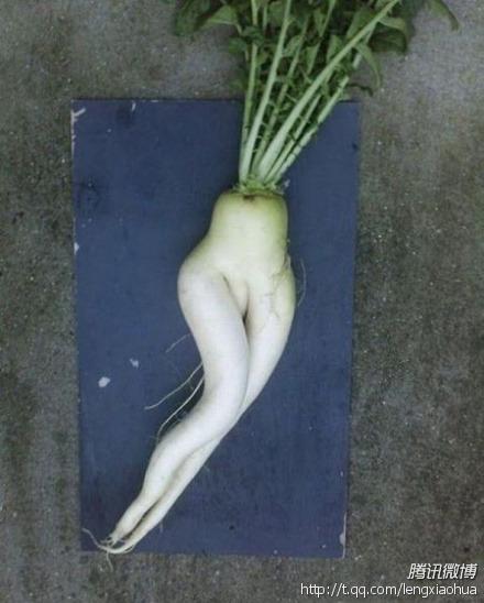 好销魂的萝卜……………