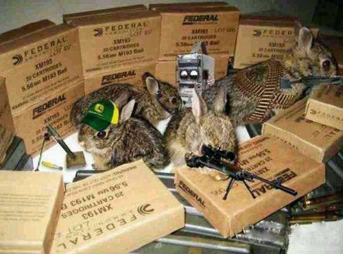 兔爷保卫战
