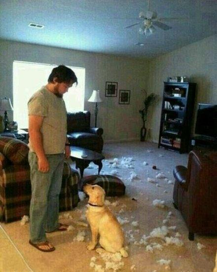 主人,我们家的沙发爆炸了,我好害怕啊~