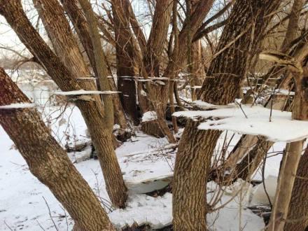 大水过后,曾经水面上的冰盖留在了树木上~