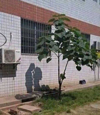 相信这是树么