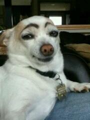 给狗狗画上眉毛,看那忧郁的眼神。顿时就二逼了 !