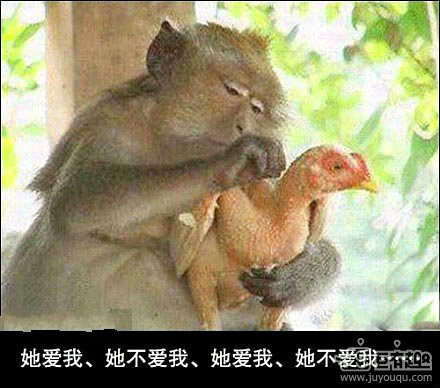 嘿,小子!快住手,我的鸡--毛都快被你扒光了