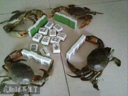 你猜那个螃蟹咋胡???