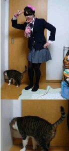 猫都无法直视他的主人男扮女装的样子了