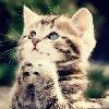 这只猫咪可爱不?喜欢的顶一个!!
