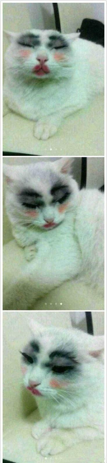 给我家猫画的妆漂亮吗?