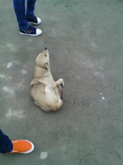 其实它是一只很可怜的流浪狗狗