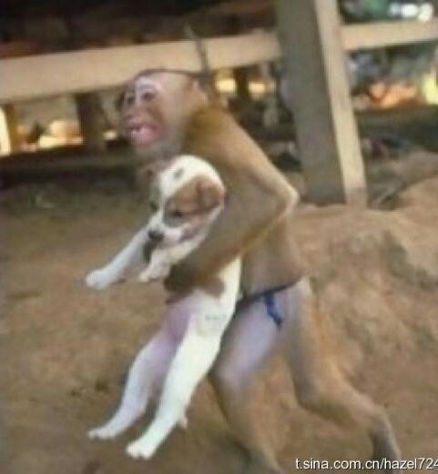 这猴要干嘛~给我放那儿