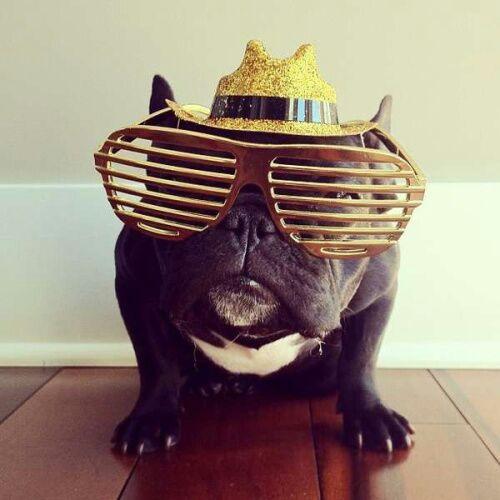 呆呆的狗带上眼镜潮了咩