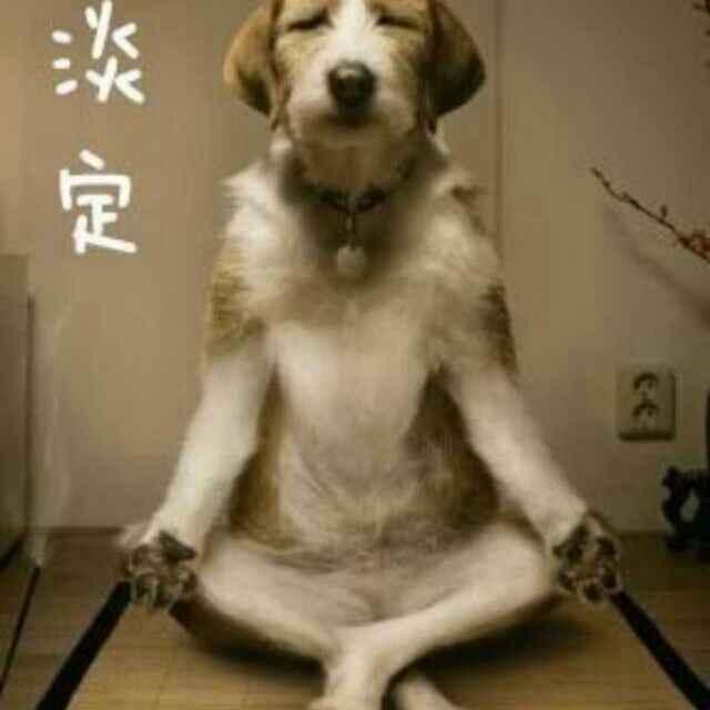 这年头连狗都会,打坐了。