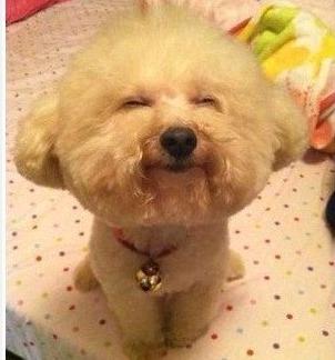介个狗狗会笑。瞬间温暖治愈~≧◇≦
