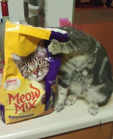 小猫咪,躲什么躲,你已经曝光啦