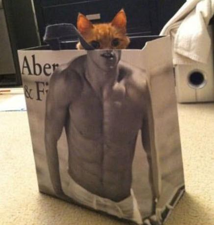 小猫咪原来想要这种身材啊