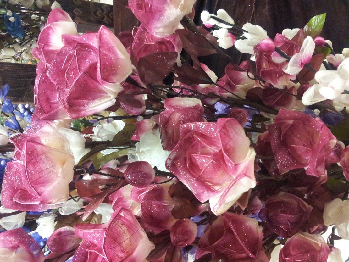 这是我有史以来,见过的最神奇的花了!!! 能开7、8年! 超好玩!