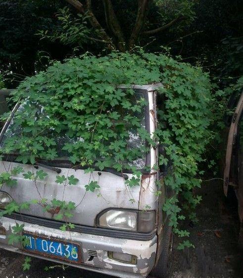 此车高端大气上档次,绿色环保人人爱