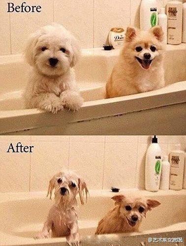 洗完澡,美女变丑女,靓猫变屌丝,萌狗变。。。(见图)