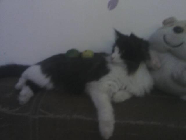 我家的猫真二,放东西在他身上还看一下。。。