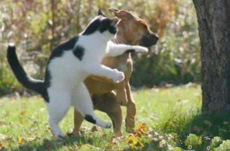 喵了个咪!给你一记左勾拳,看你还敢不敢欺负猫。