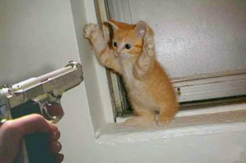 不许动,举起手来。。。