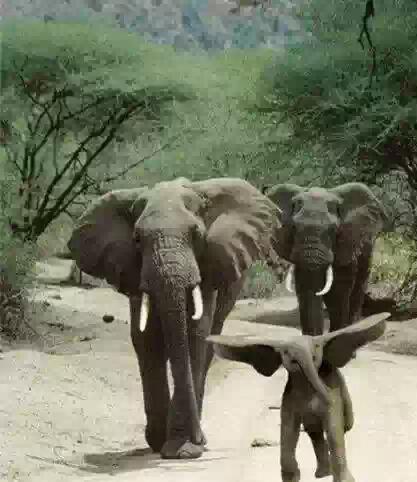 孩纸,你是要飞吗???你妈妈没告诉过你你是陆地上最大的动物,是飞不起来的~~~