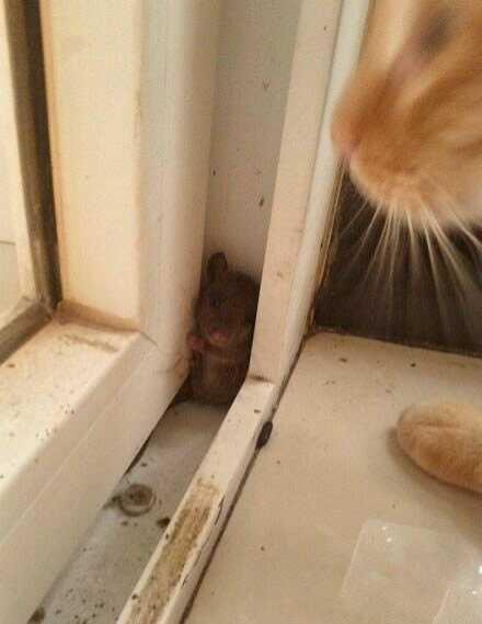 猫爷!给条活路吧。。。