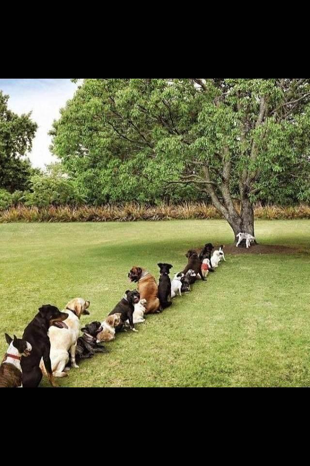 树都被砍了 就留一颗给狗狗上厕所了